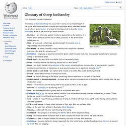 Glossary of sheep husbandry