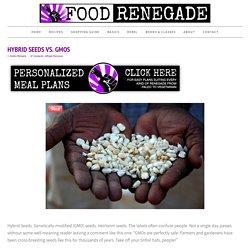 Hybrid Seeds vs. GMOs