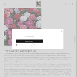 Hybrid Weed in Washington DC