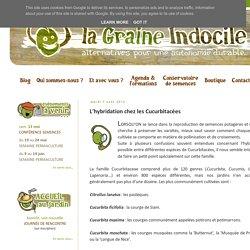 La Graine Indocile: L'hybridation chez les Cucurbitacées