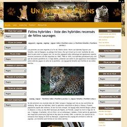 Félins hybrides - liste des hybrides recensés de félins sauvages