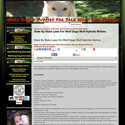 State By State Laws For Wolf Dogs Wolf Hybrids Wolves - Wolf Hybrid Puppies For Sale Wolf Dog Puppies