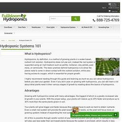 Learn The Basics of Hydroponics