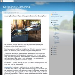 Hydroponics Gardening: Amazing Benefits and Types of Aquaponic Systems For Growing Food