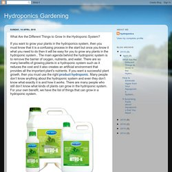 What Are the Different Things to Grow In the Hydroponic System?
