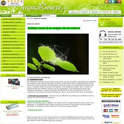 Guide de culture Hydroponique - BOUTURAGE- FLORAISON - Germination CROISSANCE PLANTE CULTURE INDOOR GROWSHOP