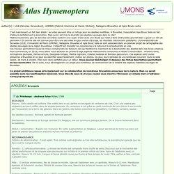 Atlas Hymenoptera - Cartographie des abeilles sauvages de Bruxelles