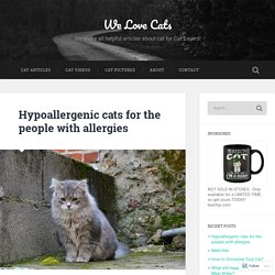 Hypoallergenic cats for the people with allergies – We Love Cats
