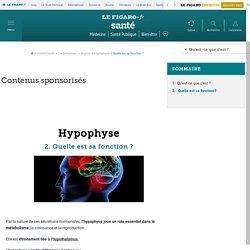 Hypophyse : Quelle est sa fonction ?