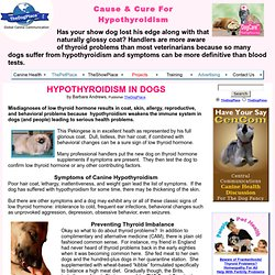 HYPOTHYROIDISM IN DOGS, CAUSE & CURE, by B.J. Andrews