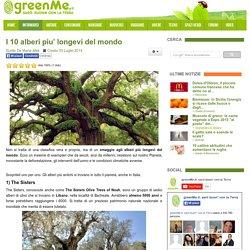I 10 alberi piu' longevi del mondo