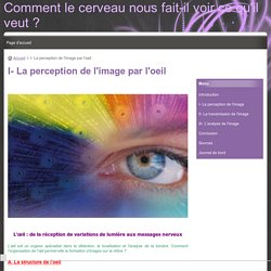I- La perception de l'image par l'oeil