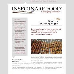 5 food companies betting on the bug business