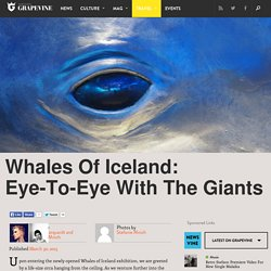 Whales Of Iceland: Eye-To-Eye With The Giants