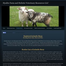 Icelandic Sheep - Hyalite Farm and Holistic Veterinary Resources LLC