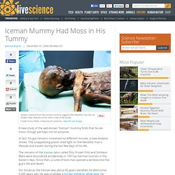 Iceman Mummy Had Moss in His Tummy