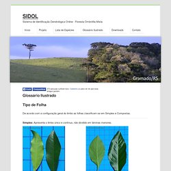 SIDOL - Sistema de Identificação Dendrológica Online - Floresta Ombrófila Mista