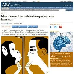 Identifican el área del cerebro que nos hace humanos