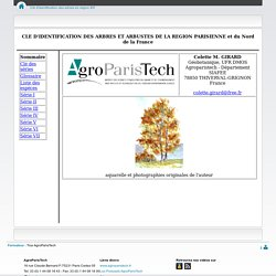 Clé d'identification des arbres en région IDF - CoursenLigne - AgroParisTech