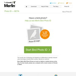 Merlin Bird ID app – Instant Bird Identification Help for 400 North American birds