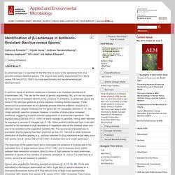 Appl. Environ. Microbiol. February 2008 Identification of β-Lactamase in Antibiotic-Resistant Bacillus cereus Spores