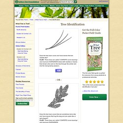 Tree Identification Guide at arborday