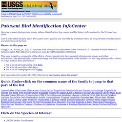 Patuxent Bird Identification InfoCenter
