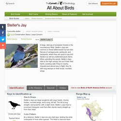 Steller's Jay, Identification, All About Birds - Cornell Lab of Ornithology