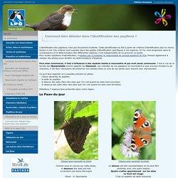 Comment bien débuter dans l'identification des papillons ? - www.faune-champagne-ardenne.org