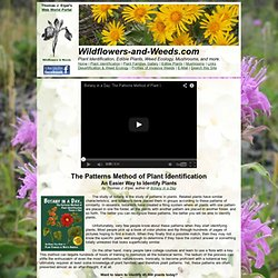 The Patterns Method of Plant Identification: Learn to recognize plant family patterns as a tool to identify new plants.