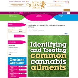 Identification et traitement des maladies communes du cannabis - Royal Queen Seeds