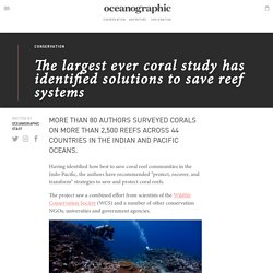 The largest ever coral study has identified solutions and strategies to save reef systems - Oceanographic - Oceanographic