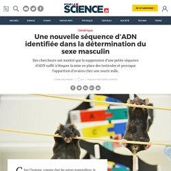 Une nouvelle séquence d'ADN identifiée dans la détermination du sexe masculin