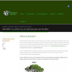 Identifier un arbre ou un arbuste par ses feuilles