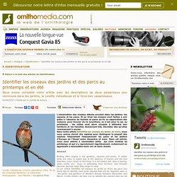Identifier les oiseaux du jardin et des parcs au printemps et en été
