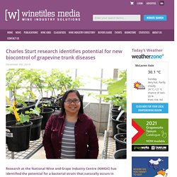 WINETITLES 09/12/19 Charles Sturt research identifies potential for new biocontrol of grapevine trunk diseases