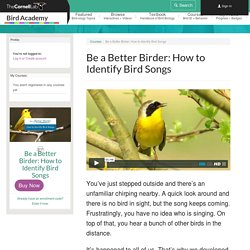 Be a Better Birder: How to Identify Bird Songs