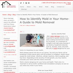Mold Removal King of Prussia, PA
