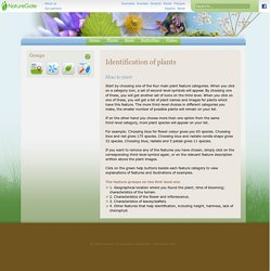Identify flowering plants - NatureGate