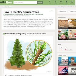 How to Identify Spruce Trees: 6 steps