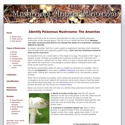 Identify Poisonous Mushrooms: Some Detailed Tips