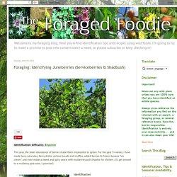 The Foraged Foodie: Foraging: Identifying Juneberries (Serviceberries & Shadbush)
