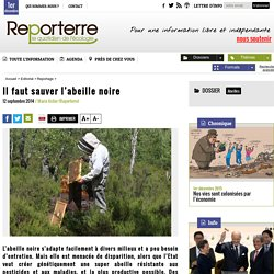 Il faut sauver l'abeille noire - Reportage labo CNRS de Gif-sur-Yvette