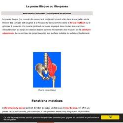 Anatomie d'un muscle majeur pour votre dos