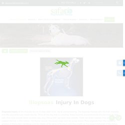 Best Iliopsoas Injury Treatment Hospital for dogs in League city
