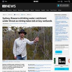 Sydney, Illawarra drinking water catchment under threat as mining takes toll on key wetlands
