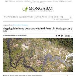 Illegal gold mining destroys wetland forest in Madagascar park