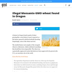 Illegal Monsanto GMO wheat found in Oregon