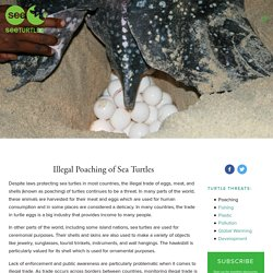 Illegal Poaching — SEE Turtles