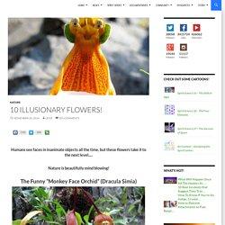 10 Illusionary Flowers!
